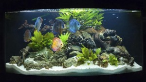 Fish Planet - Fish Care Products Shop - Rawalpindi