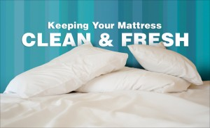Squeaky Mattress Cleaning Adelaide