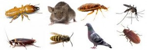 Real Pest Control -  Melbourne