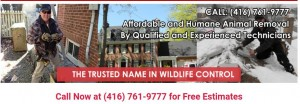 Four Seasons Wildlife Removal - Raccoon Removal Toronto