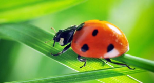 Be Pest Free Control Melbourne