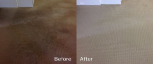Zero Stain - Carpet Cleaning Canberra