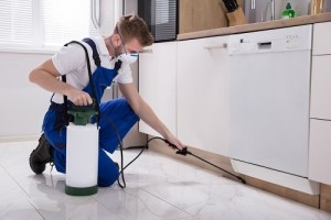 Best Pest Removal Geelong