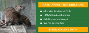 Same Day Pest Control Toowoomba