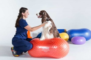 WalkingPawsRehab - Pet Rehabilitation
