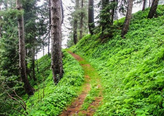 Nathia Gali to Miranjani Hiking Track, KPK, Pakistan